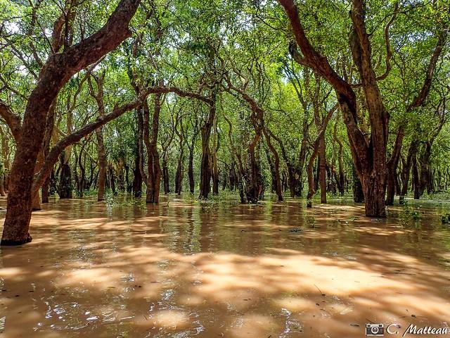 180728-112 La jungle inondée (2018 Trip)