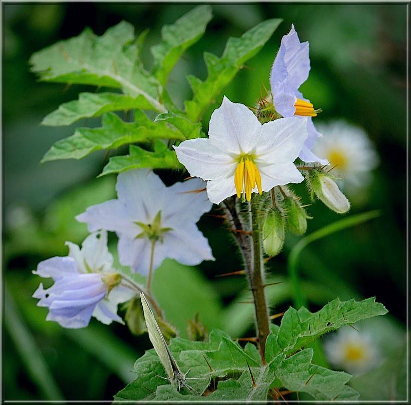 Au jardin des plantes. - Page 8 48958902533_16e9aa96ba_c
