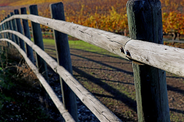 the fence between autumn and winter.......