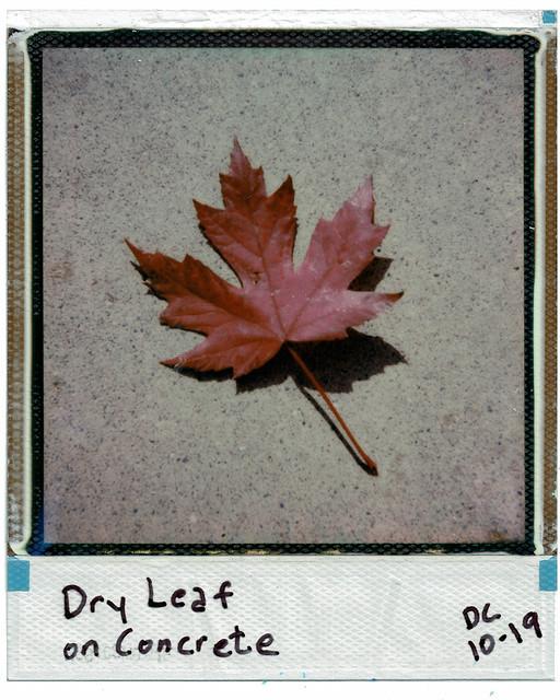 Dry Leaf on Concrete