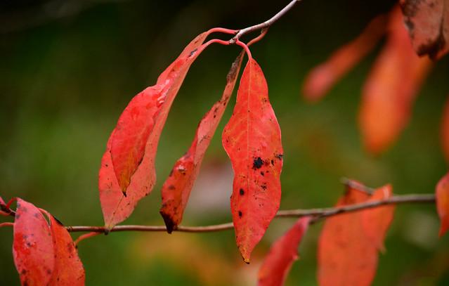 otoño rojo