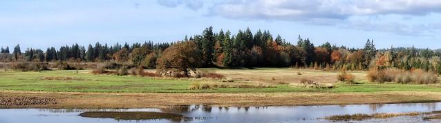 Oregon Wetland