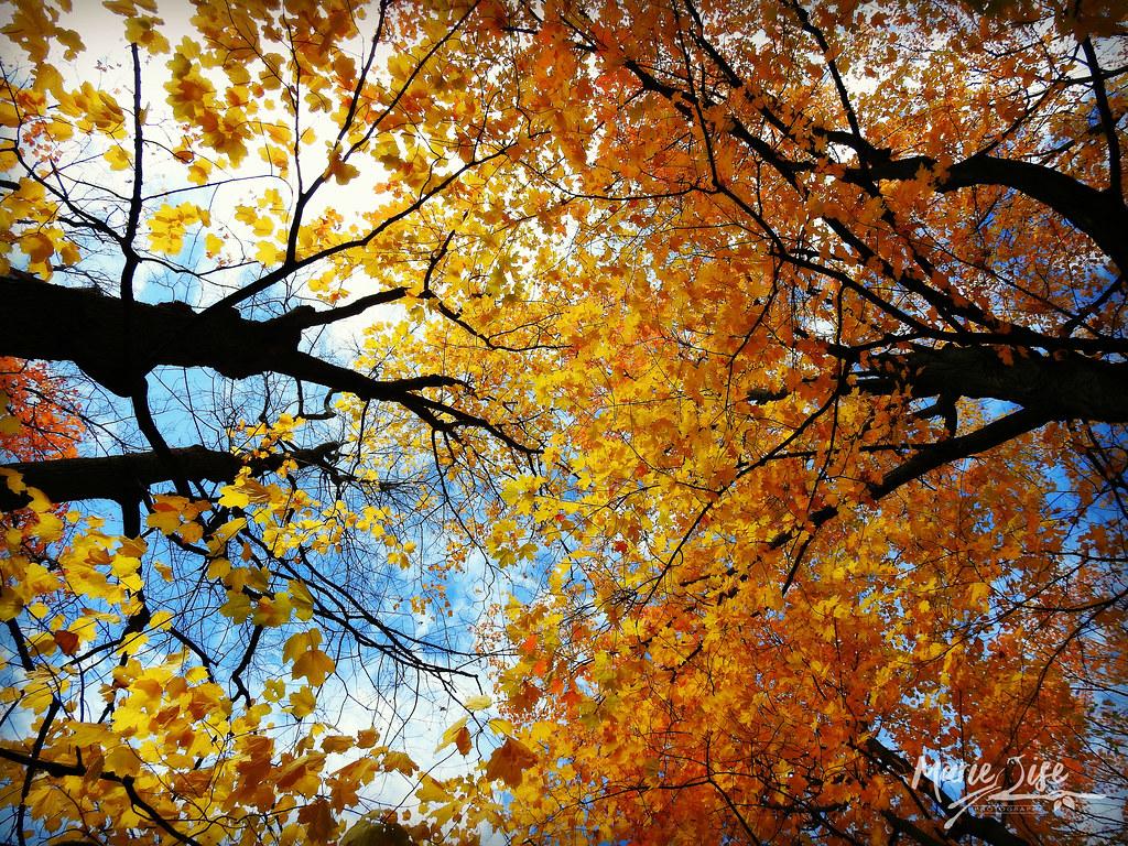 foto de 🍂 paysage d'automne   Marie-Lise Beaudin   Flickr