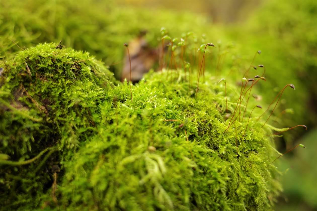 谷川岳 苔むす森