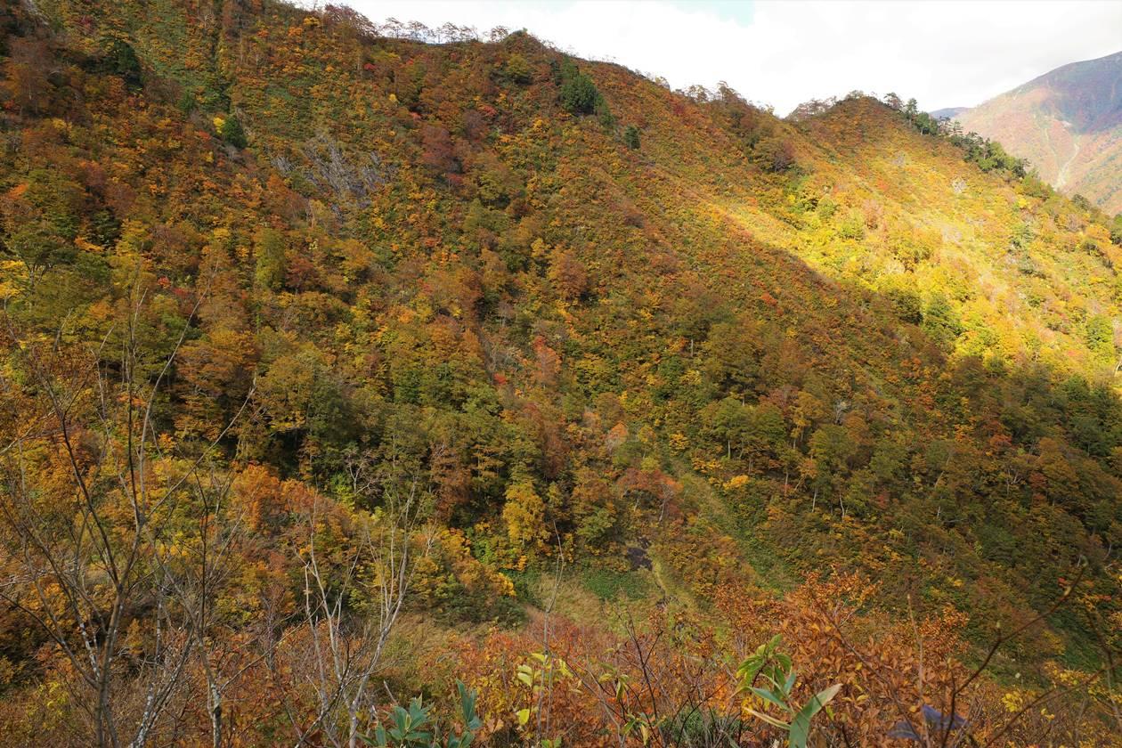 谷川岳 全山紅葉