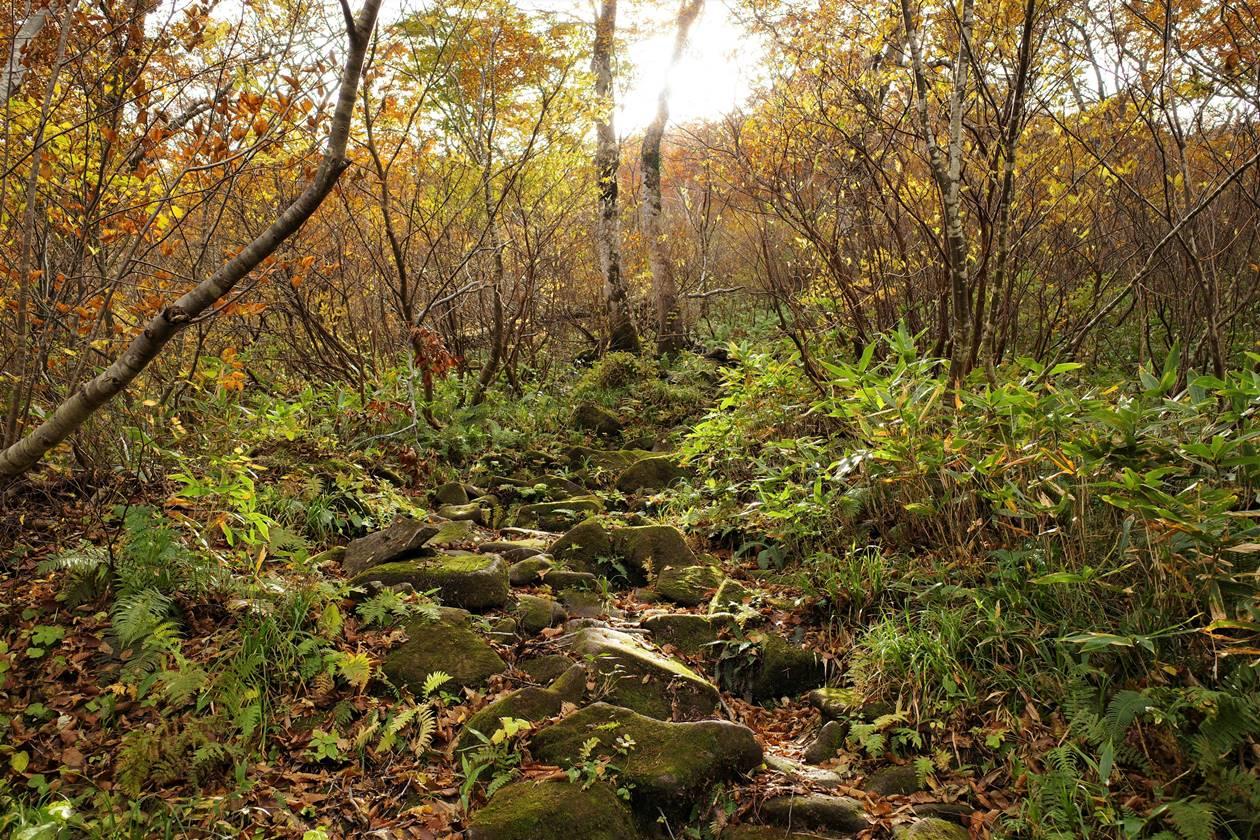 紅葉の谷川岳登山