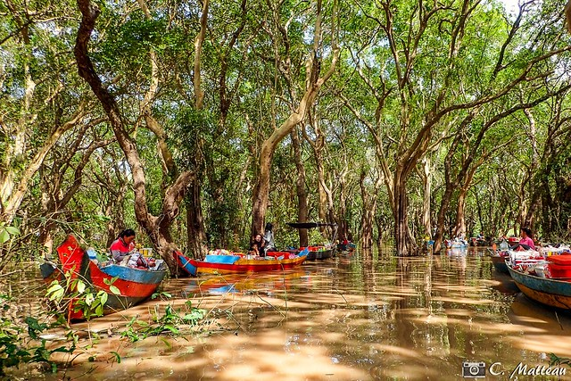 180728-116 La jungle inondée (2018 Trip)