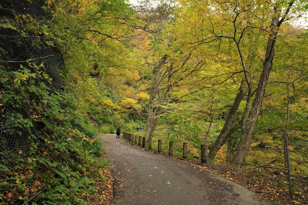 一ノ倉沢までの林道と紅葉