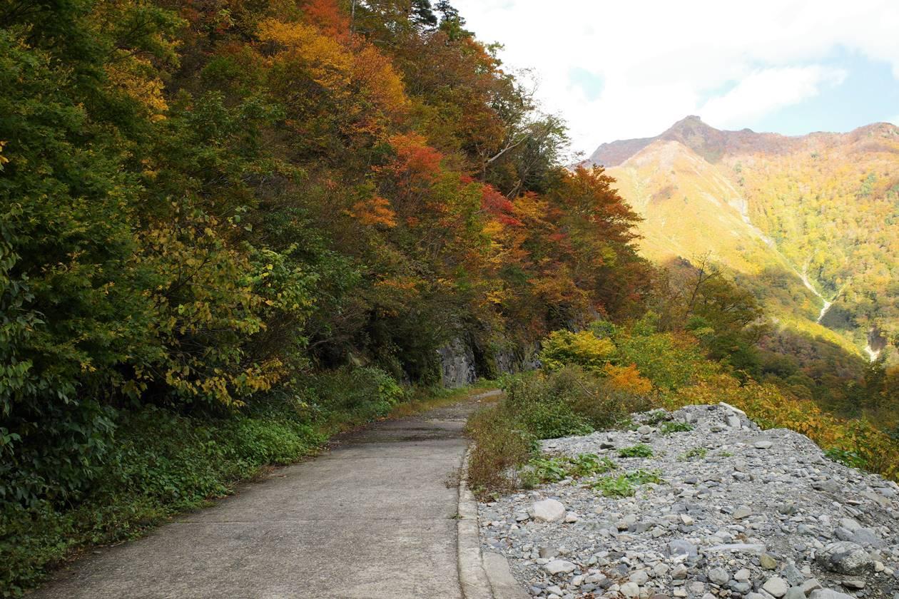 一ノ倉沢から幽ノ沢方面の林道と紅葉