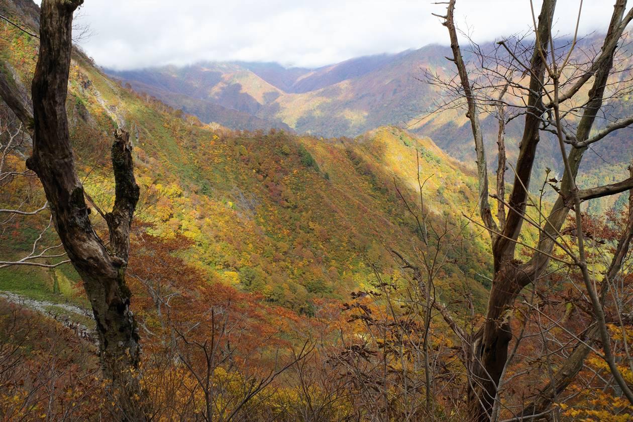 谷川岳 厳剛新道の紅葉