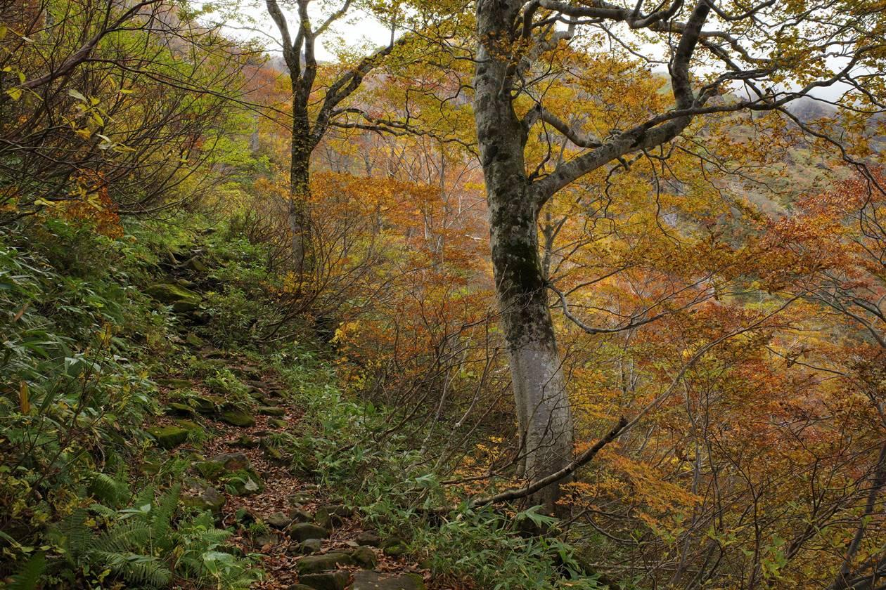谷川岳 紅葉の登山道