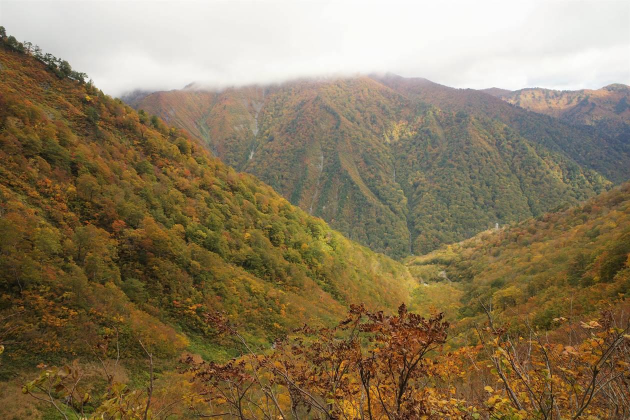 谷川岳 山腹の紅葉