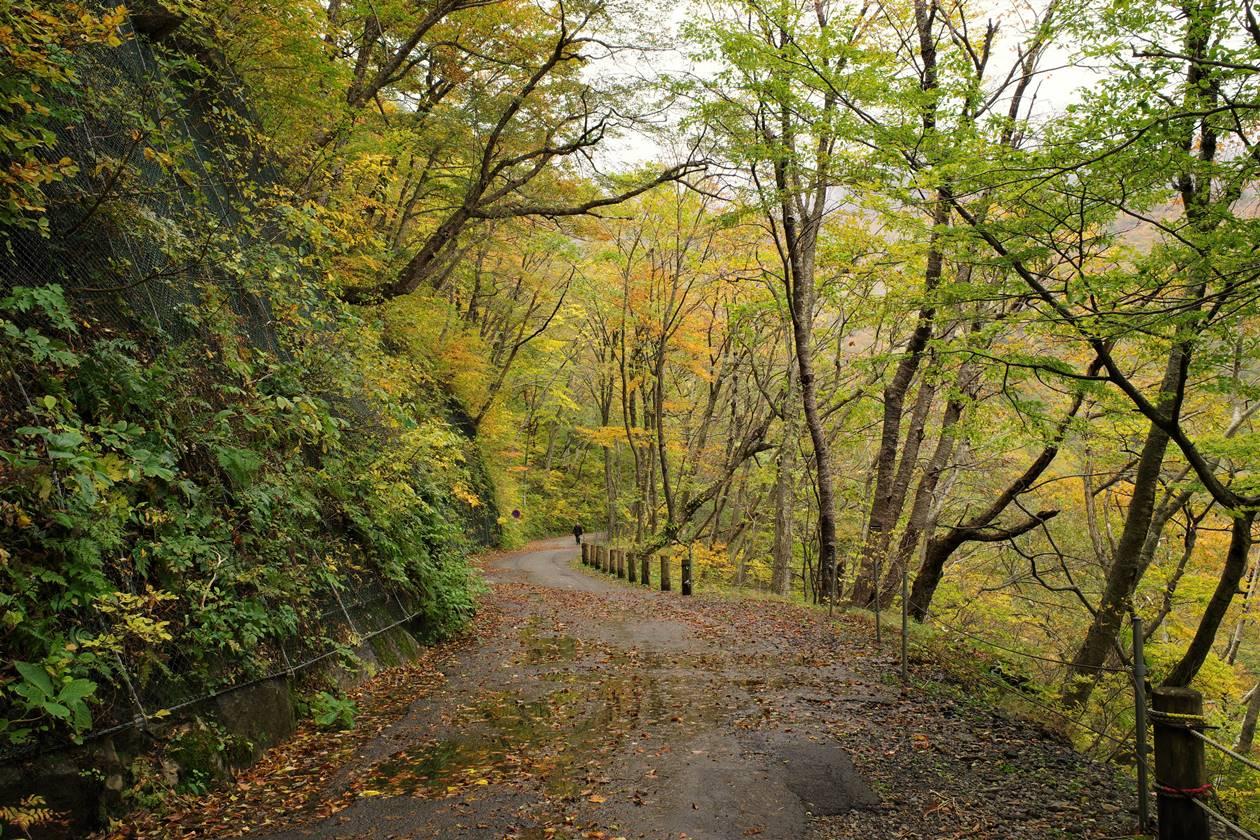 一ノ倉沢 紅葉の林道