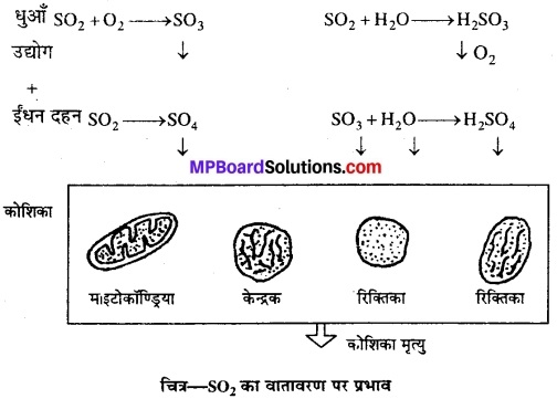MP Board Class 12th Biology Solutions Chapter 16 पर्यावरण के मुद्दे 1