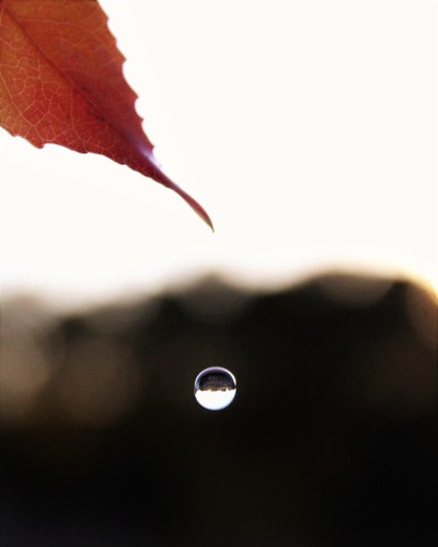 Autumnal Melancholy