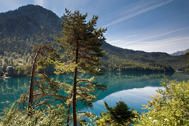 Alpsee with Pines