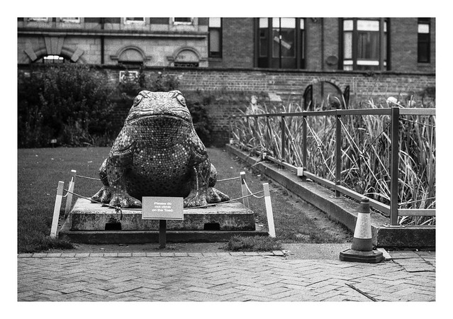FILM - This toad is not for riding