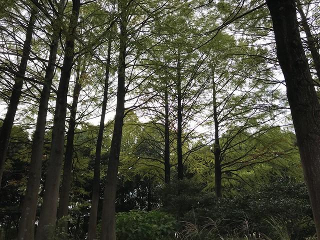 Autumn Walk, Oji @Nara,Oct2019