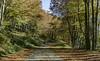 Foliage by Chickenhawk72