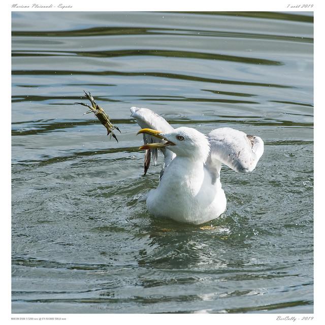 La mouette   The sea-gull