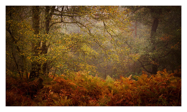 Ashdown Forest / October 24th