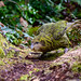 Kakapo - Photo (c) Jake Osborne, some rights reserved (CC BY-NC-SA)