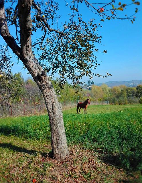 Countryside -   Humoreni -  Jud. Suceava -   North Romania