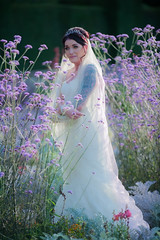 In Among the Lavender