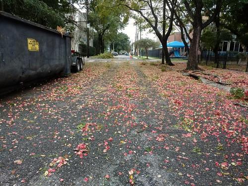 Golden rain debris