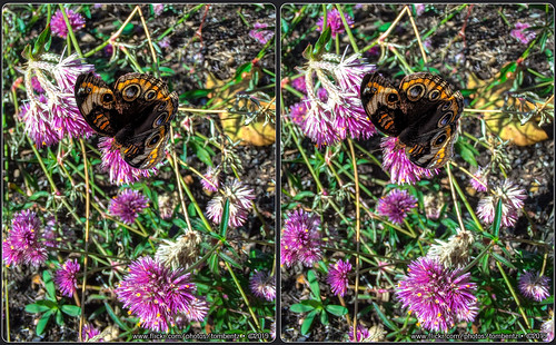 Autumn Butterfly (Stereo)