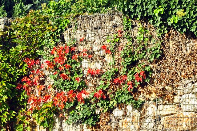 Oktober 2019_Farbenprächtigen Fotos auf einer Schönwetterfahrt mit dem Oldtimer Ford Mustang in Mannheim, Heidelberg und dazwischen ... Herbstfarben ... Foto: Brigitte Stolle