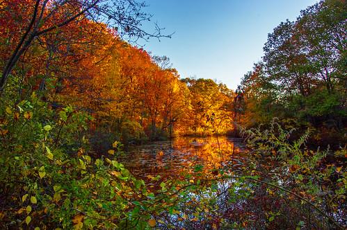 smack53 autumn autumnseason autumncolors fall fallseason fallcolors autumnal foliage westmilford newjersey nikon d100 nikond100 scenery scenic serene