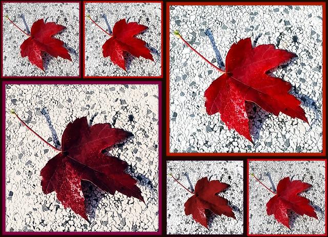 Foglia d'autunno: variazione cromatica sul tema
