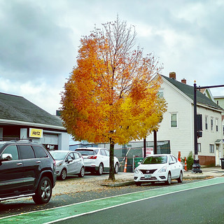 Thinning #fall #newengland #somerville