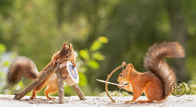 Red squirrels holding a Bow and Arrow with Target