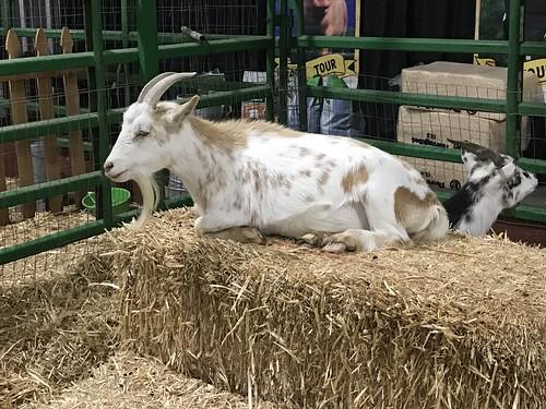 Arizona State Fair-20191025-2190