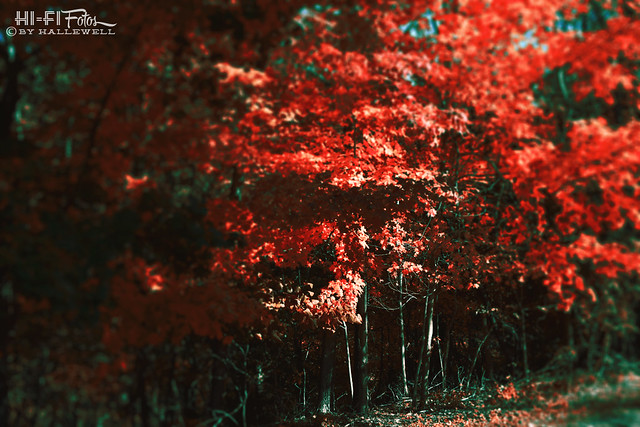 fall beckons