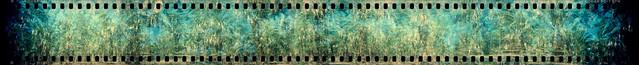 palm trees (holga 35mm pano xpro). mecca, ca. 2019.