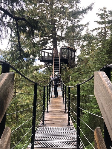 Ziptrek Ecotours | Whistler Mountain, British Columbia