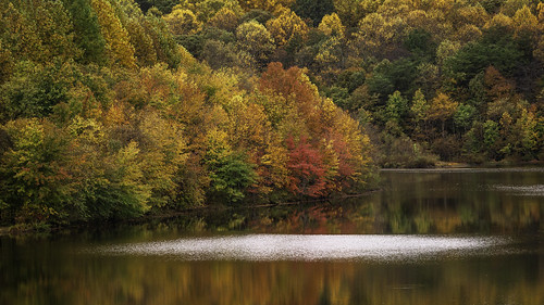 autumn colors fall foliage hiking lakemercer nature ripples springfield virginia water seasons crimson outdoors trees lake reflection beauty red scenery landscape lakemercerdam