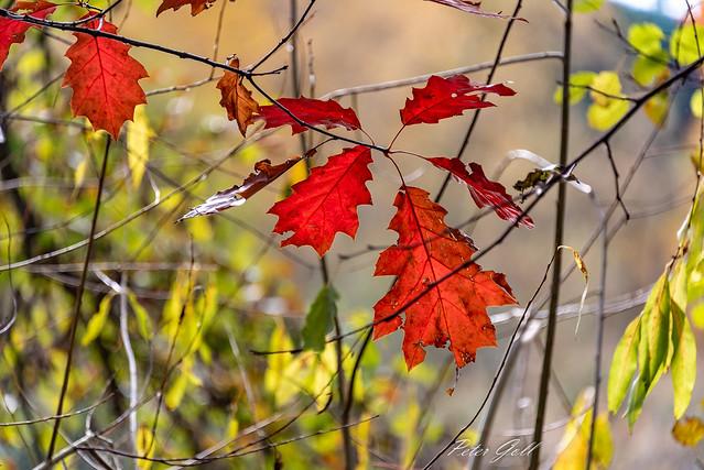 Autumn - Leaves - 1187