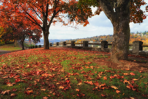 ian sane images mcloughlinpromenadecolors oregoncity oregon fall autumn colors trees leaves city park landscape photography canon eos 5ds r camera ef1740mm f4l usm lens