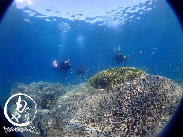 もりもり珊瑚の上を泳ぐ魚とダイバー♪♪