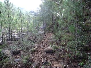 Le sentier après le rocher basculé