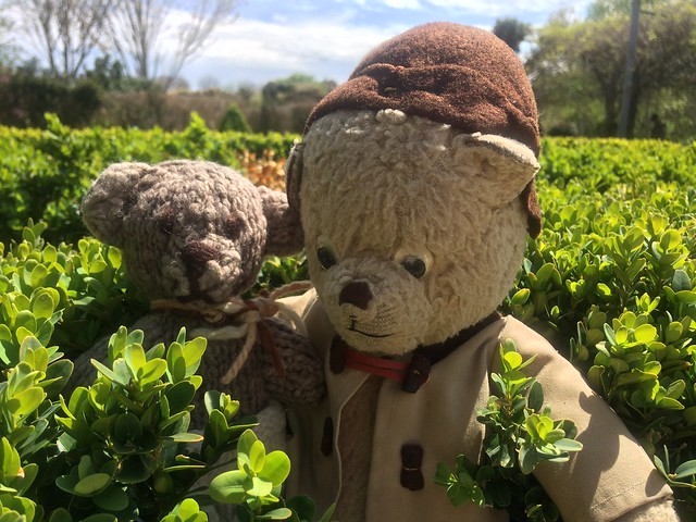 Paddington and Scout Play Hide-And-Seek in the Parterre Gardens 5.