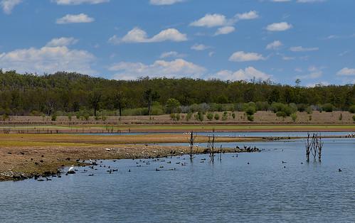 2019 lakeparadise paradisedam nikond7200 tamronsp2470mmf28divcusd bluesky clouds water ducks deadtree pelicans cormorant egret mountains landscape burnettriver sundayanimals
