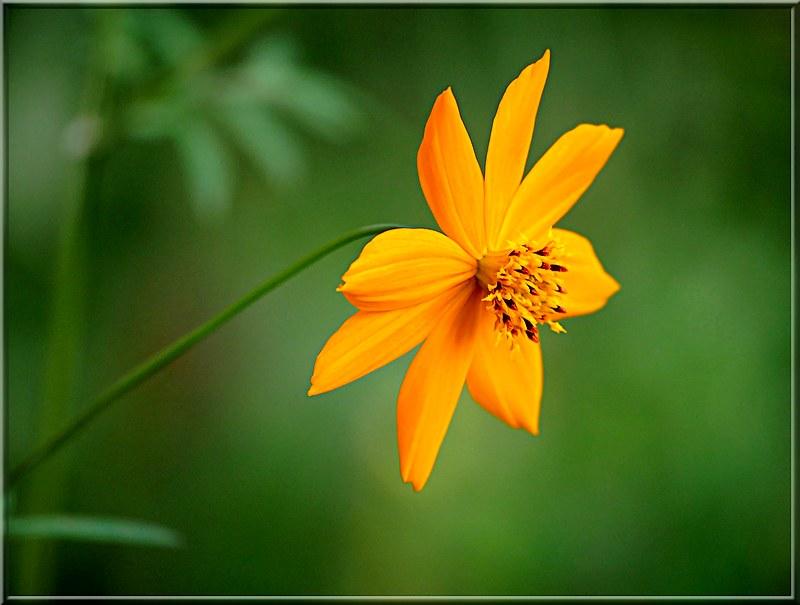 Au jardin des plantes. - Page 8 48966644497_3dc2eeee19_c