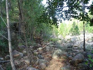 Le sentier après le rocher basculé sur une partie plate