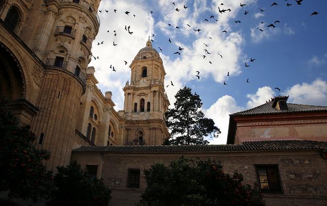 Pigeons at home at the Catedral of Málaga, España