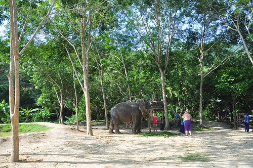 Green Elephant Sanctuary